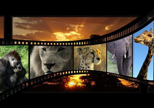 movie-596154_1920