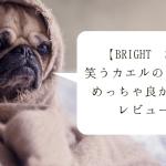 【Bright Starts】笑うカエルのおもちゃがめっちゃ良かったからレビューする