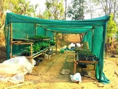 A nursery provides the saplings.