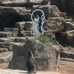 二次元に恋するペンギンが可愛い【けものフレンズ】