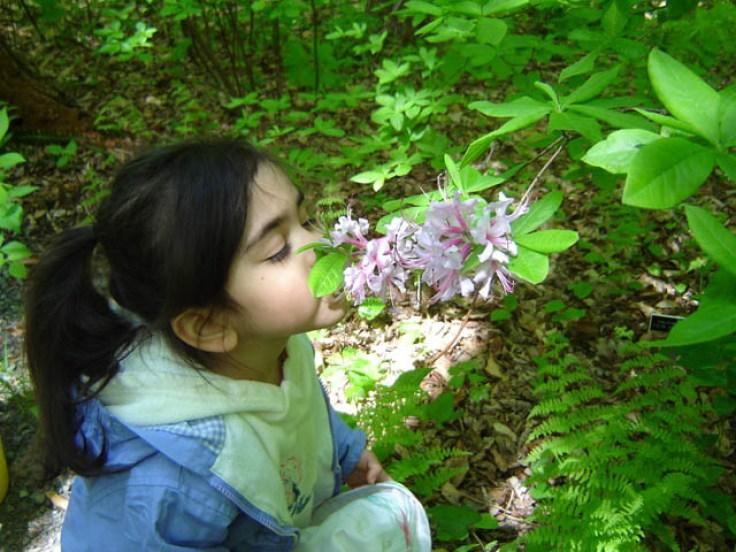 ילדה מריחה פרחים