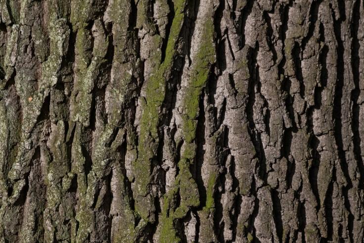 טחב על עץ