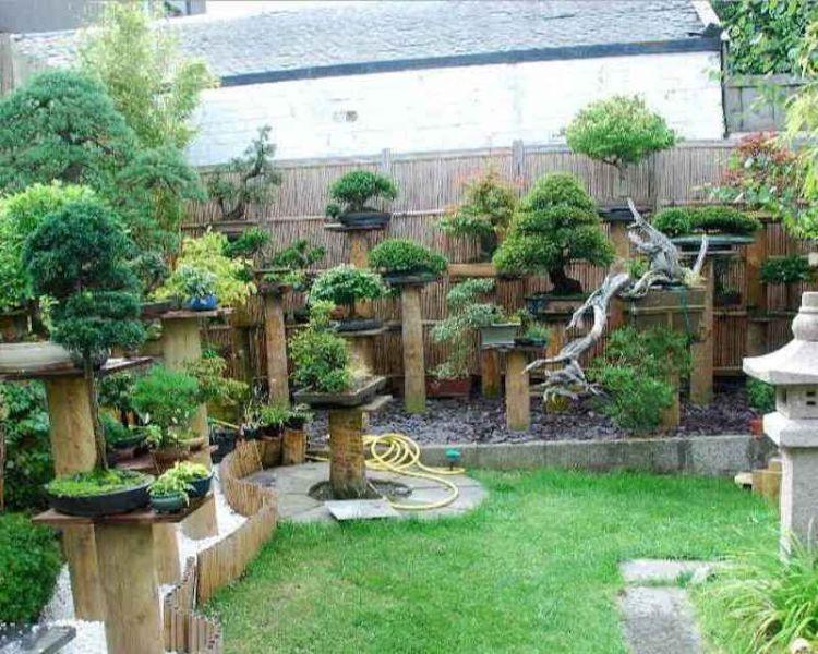 bonsai untuk taman