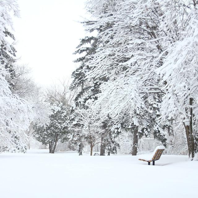 Park Trees Snow Bench Frost  - hthyen02 / Pixabay