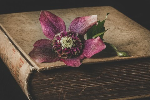 Helleborus Flower Garden Vegetable  - Nietjuh / Pixabay