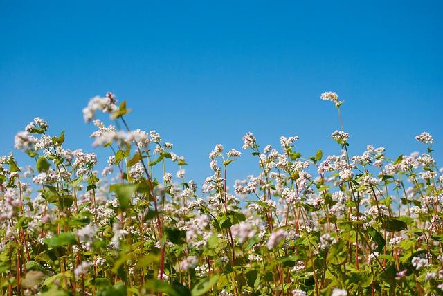 Agriculture Background Bloom  - SabbraCadabra / Pixabay