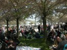 Hanami - Lunchtime under the cherrytrees