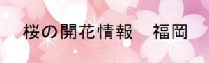 桜の開花情報 福岡