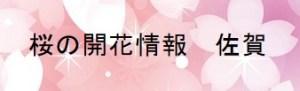 桜の開花情報 佐賀