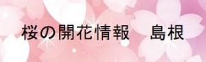 桜の開花情報 島根