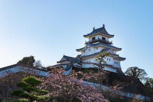 掛川城 桜 画像