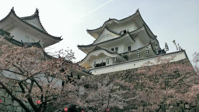 伊賀上野城 桜