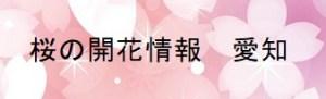 桜の開花情報愛知