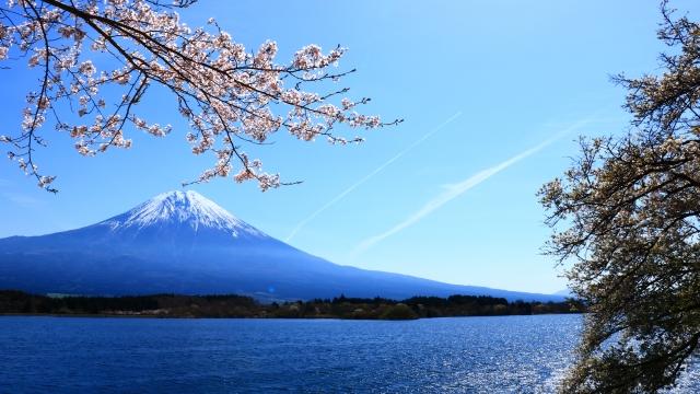 田貫湖 桜 画像