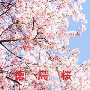 徳島の桜情報