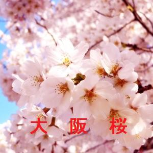 大阪の桜情報