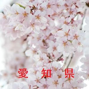 愛知の桜情報