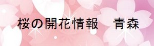 桜の開花情報青森