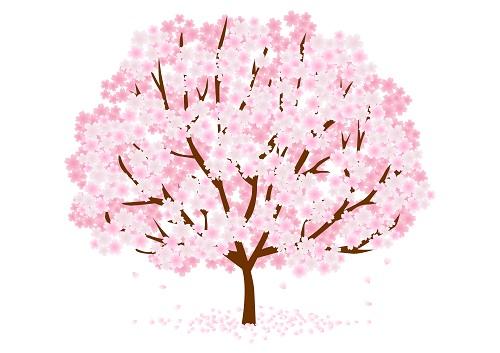 桜の開花日・満開日