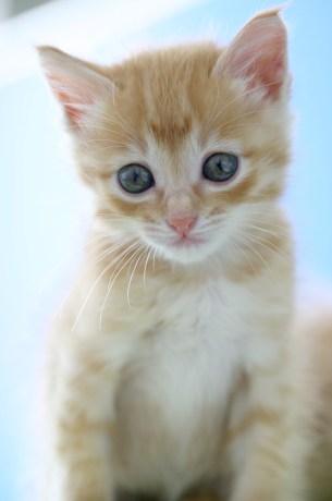 仔猫 Kitten