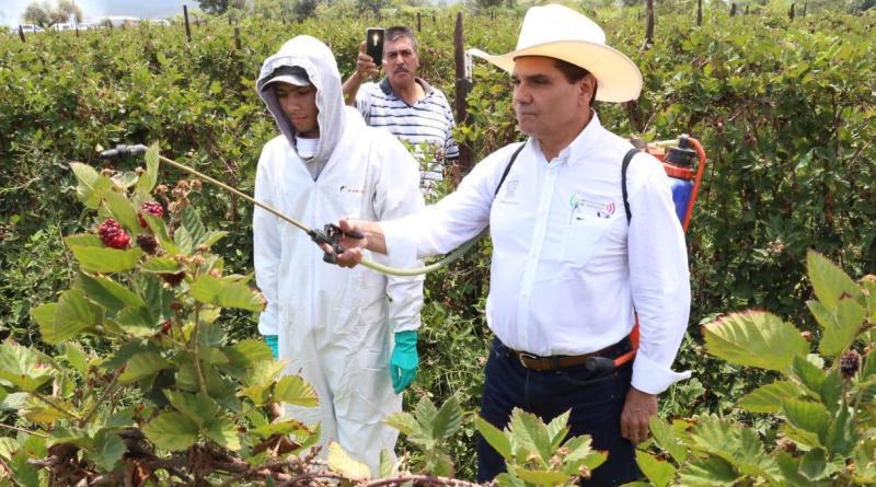 Camina Michoacán hacia una agricultura sustentable: Silvano Aureoles