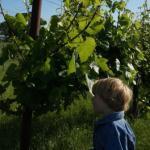 April 2015 in the Vineyard