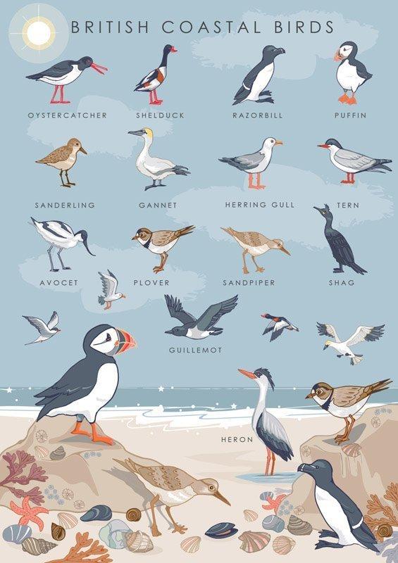 British Coastal Birds Collection Card, by Heart of a Garden