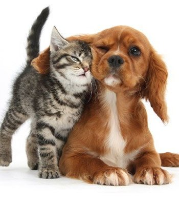 Dog And Kitten Photographic Card, by Heart of a Garden
