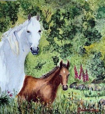 Dartmoor Ponies Card