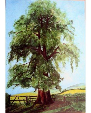 Elm Tree Card