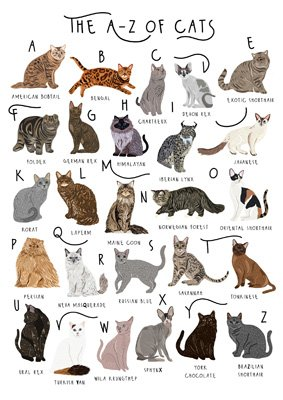 The A-Z of Cats Card