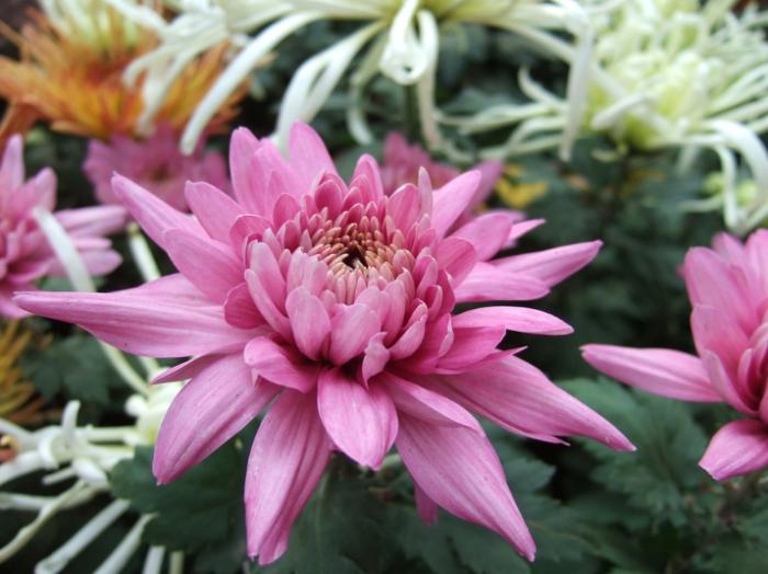 50 Gambar Bunga Dan Tanamah Hias Terindah Di Dunia Gambar Hd