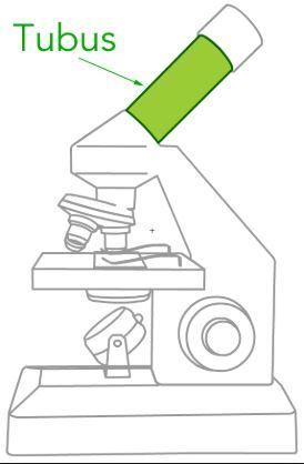 15 Bagian Bagian Mikroskop Dan Fungsinya Beserta Gambarnya Terlengkap Salamadian