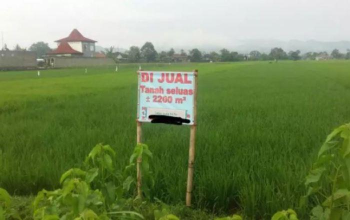contoh iklan baris jual tanah