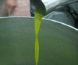 olive oil being made