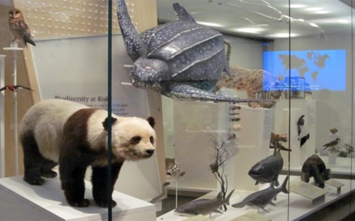 شانزده تصویر سقف موزه نشانه چیست؟