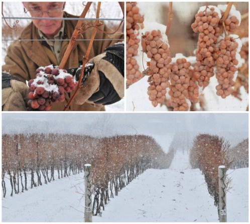 این منطقه توانسته 84 درصد کل تولید شراب کانادا را تامین کند. و بسیاری از تولیدات آن از جمله بهترین شراب های آمریکای شمالی و کانادا محسوب می شوند.