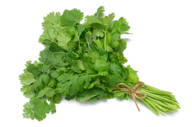 Fűszernövények - koriander