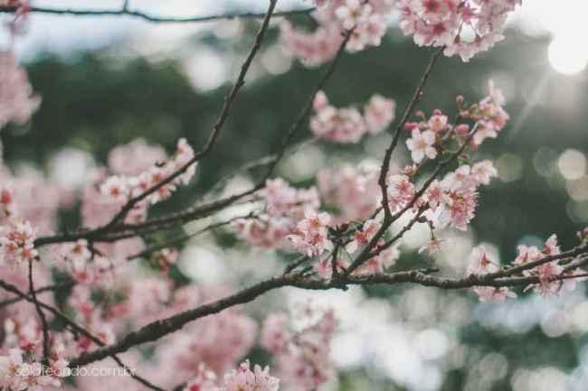 Festa-Cerejeira-14-13