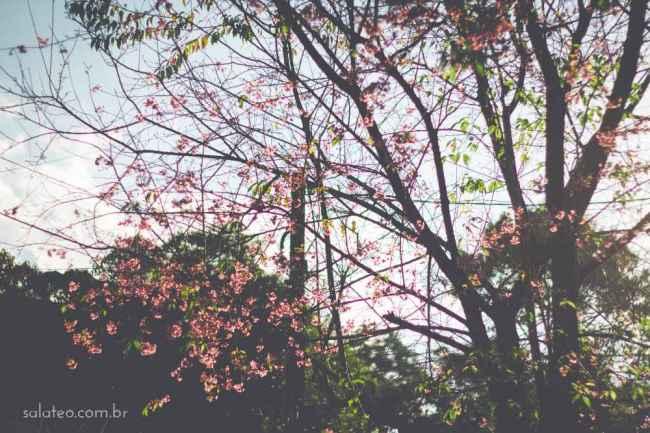 Amy-Wineflowers-10