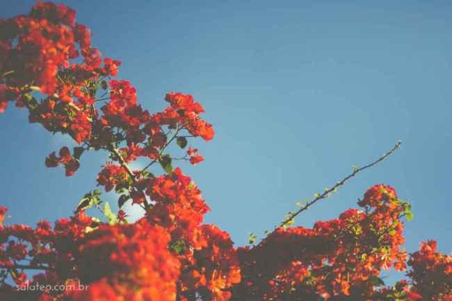 Amy-Wineflowers-9