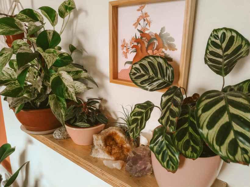 prateleira decorada com plantas e cristais