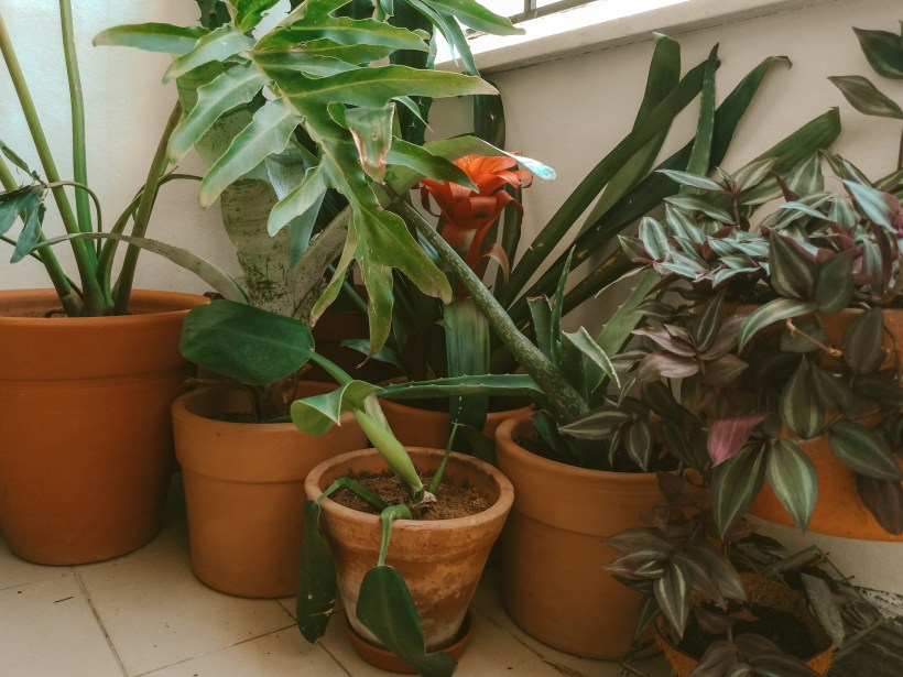 vasos de terracota com plantas variadas