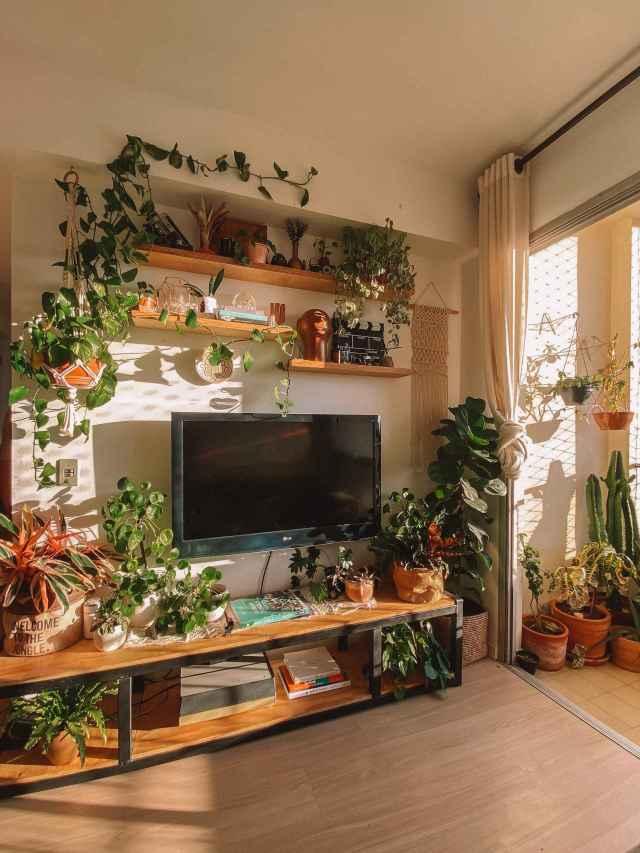5 dicas para começar a ter plantas