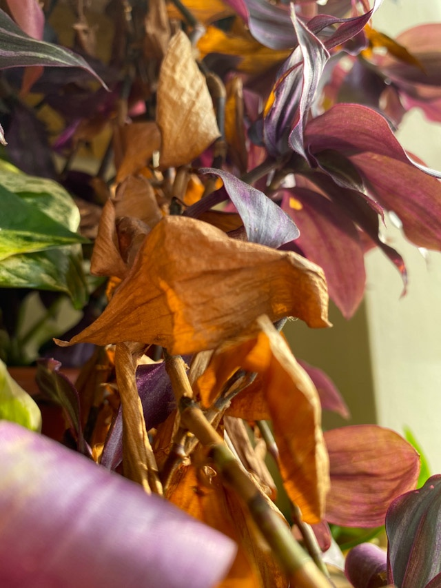 Problemas mais comuns nas plantas