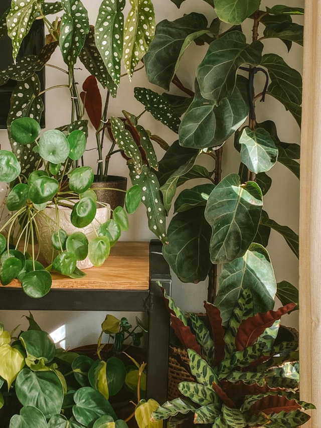 Ecoterapia – a natureza como aliada no tratamento da depressão