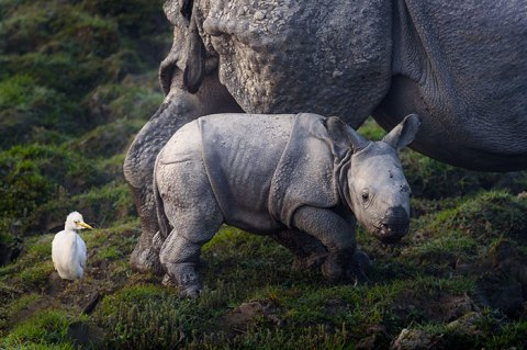 national-park-shoots-people-protects-rhinos-kaziranga-7