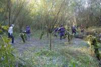 SACV coppicing at Sale Water Park iii