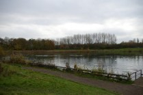 After clearing self-seeded trees at lake edge 2