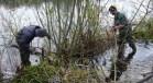Management of an overgrown willow groyne